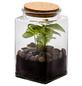 flowerbox Flowerbox Terrarium Quitto Autonom S-Thumbnail