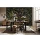 KOMAR Foto-Papiertapete »Olive Tree«, Breite 368 cm, inkl. Kleister-Thumbnail