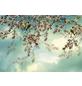 KOMAR Foto-Papiertapete »Sakura«, Breite 368 cm, inkl. Kleister-Thumbnail
