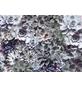 KOMAR Foto-Papiertapete »Shades«, Breite 368 cm, inkl. Kleister-Thumbnail