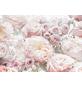 KOMAR Foto-Papiertapete »Spring Roses«, Breite 368 cm, inkl. Kleister-Thumbnail