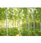 KOMAR Foto-Papiertapete »Sunday«, Breite 368 cm, inkl. Kleister-Thumbnail