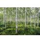 KOMAR Foto-Papiertapete »Sunny Day«, Breite 368 cm, inkl. Kleister-Thumbnail