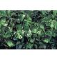KOMAR Foto-Papiertapete »Verdure«, Breite 368 cm, inkl. Kleister-Thumbnail
