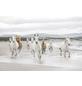 KOMAR Foto-Papiertapete »White Horses«, Breite 368 cm, inkl. Kleister-Thumbnail