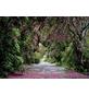 KOMAR Foto-Papiertapete »Wicklow Park«, Breite 368 cm, inkl. Kleister-Thumbnail
