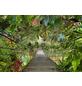KOMAR Foto-Papiertapete »Wild Bridge«, Breite 368 cm, inkl. Kleister-Thumbnail