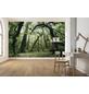 KOMAR Foto-Vliestapete »Ancient Green «, Breite 450 cm, seidenmatt-Thumbnail