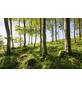 KOMAR Foto-Vliestapete »Buchenspektakel«, Breite 450 cm, seidenmatt-Thumbnail