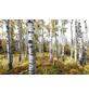 KOMAR Foto-Vliestapete »Colorful Aspenwoods«, Breite 450 cm, seidenmatt-Thumbnail