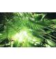 KOMAR Foto-Vliestapete »Dschungeldach«, Breite 450 cm, seidenmatt-Thumbnail