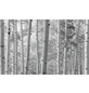 KOMAR Foto-Vliestapete »Espenwald«, Breite 450 cm, seidenmatt-Thumbnail