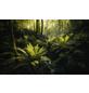 KOMAR Foto-Vliestapete »Fjordland Woods «, Breite 450 cm, seidenmatt-Thumbnail
