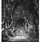 KOMAR Foto-Vliestapete »Forevenue«, Breite 250 cm, seidenmatt-Thumbnail