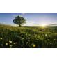 KOMAR Foto-Vliestapete »Frühling«, Breite 450 cm, seidenmatt-Thumbnail
