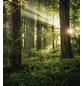 KOMAR Foto-Vliestapete »Goblins Woods«, Breite 250 cm, seidenmatt-Thumbnail