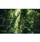 KOMAR Foto-Vliestapete »Green Leaves «, Breite 450 cm, seidenmatt-Thumbnail