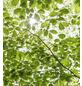 KOMAR Foto-Vliestapete »Im Frühlingswald«, Breite 250 cm, seidenmatt-Thumbnail
