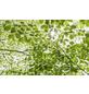 KOMAR Foto-Vliestapete »Im Frühlingswald«, Breite 450 cm, seidenmatt-Thumbnail