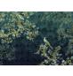 KOMAR Foto-Vliestapete »Paradis«, Breite 350 cm, seidenmatt-Thumbnail