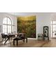 KOMAR Foto-Vliestapete »Poppy World«, Breite 250 cm, seidenmatt-Thumbnail
