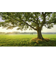 KOMAR Foto-Vliestapete »The Magic Tree«, Breite 450 cm, seidenmatt-Thumbnail