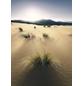 KOMAR Foto-Vliestapete »Vivid Dunes«, Breite 200 cm, seidenmatt-Thumbnail