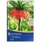 KIEPENKERL Fritillaria Rubra, Orange, 1 Blumenzwiebel-Thumbnail
