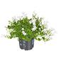 GARTENKRONE Frühjahrsbepflanzung-Thumbnail