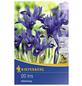 KIEPENKERL Frühlingsiris reticulata Iris-Thumbnail