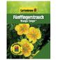 GARTENKRONE Fünffingerstrauch, Potentilla fruticosa »Mango Tango «, gelb, winterhart-Thumbnail