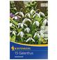 KIEPENKERL Galanthus Woronowii, Weiß, 15 Blumenzwiebeln-Thumbnail