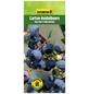GARTENKRONE Garten-Heidelbeere Vaccinium corymbosum »Darrow«-Thumbnail