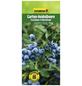 GARTENKRONE Garten-Heidelbeere Vaccinium corymbosum »Earlyblue«-Thumbnail