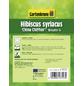 GARTENKRONE Garteneibisch, Hibiscus syriacus »China Chiffon «, hellrosa, winterhart-Thumbnail