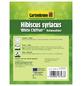 GARTENKRONE Garteneibisch, Hibiscus syriacus »White Chiffon «, weiß, winterhart-Thumbnail