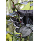 GARDENA Gartenhandschuhe, schwarzgrau, KeraTect-glasiert-Thumbnail