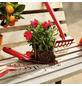 CONNEX Gartenhandschuhe »Spandex«, grün-Thumbnail