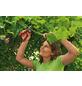 WOLF GARTEN Gartenschere, Klingenlänge: 4 mm, Stahl-Thumbnail