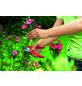 WOLF GARTEN Gartenschere, Klingenlänge: 4,5 mm, Stahl-Thumbnail