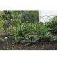 FLORAWORLD Geflechtzaun, HxL: 90 x 1000 cm, grün-Thumbnail