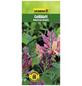 GARTENKRONE Geißblatt, Lonicera heckrottii »American Beauty«, zweifarbig, winterhart-Thumbnail