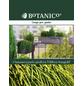 Gelbe Fadenzypresse pisifera Chamaecyparis »Filifera Sungold«-Thumbnail