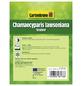 GARTENKRONE Gelbe Gartenzypresse, Chamaecyparis lawsoniana »Ivonne«, winterhart-Thumbnail
