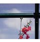 RION Gewächshaus »Prestige«, B x T x H: 267 x 389 x 238 cm-Thumbnail