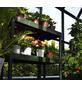 RION Gewächshaus »Prestige«, B x T x H: 267 x 639 x 238 cm-Thumbnail