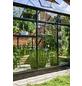HALLS Gewächshaus »Qube«, 3,92 m², Aluminium, winterfest-Thumbnail
