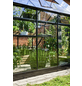 HALLS Gewächshaus »Qube«, 6,36 m², Aluminium, winterfest-Thumbnail