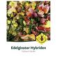 Ginster, Cytisus »in Sorten«, Blütenfarbe bunt-Thumbnail