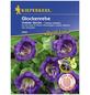 KIEPENKERL Glockenrebe, Cobaea scandens, Samen, Blüte: lila-Thumbnail